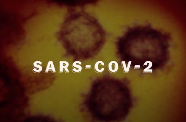 coronavirus explained1