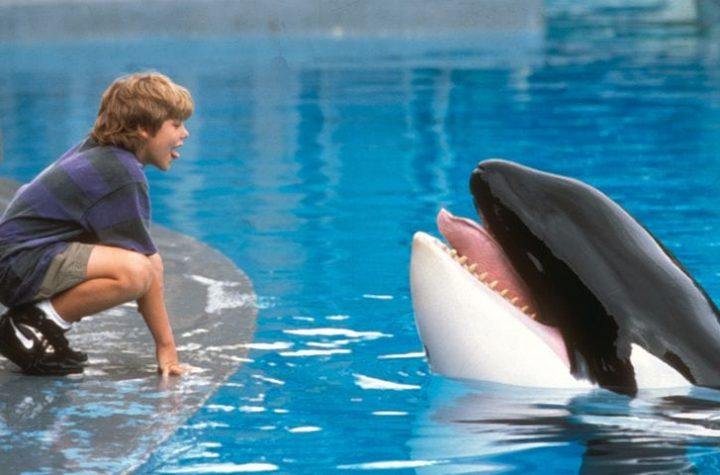 free willy (2)