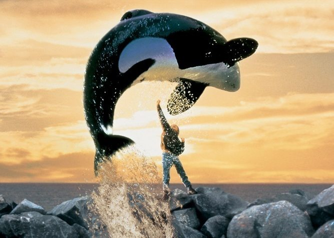 free willy (5)